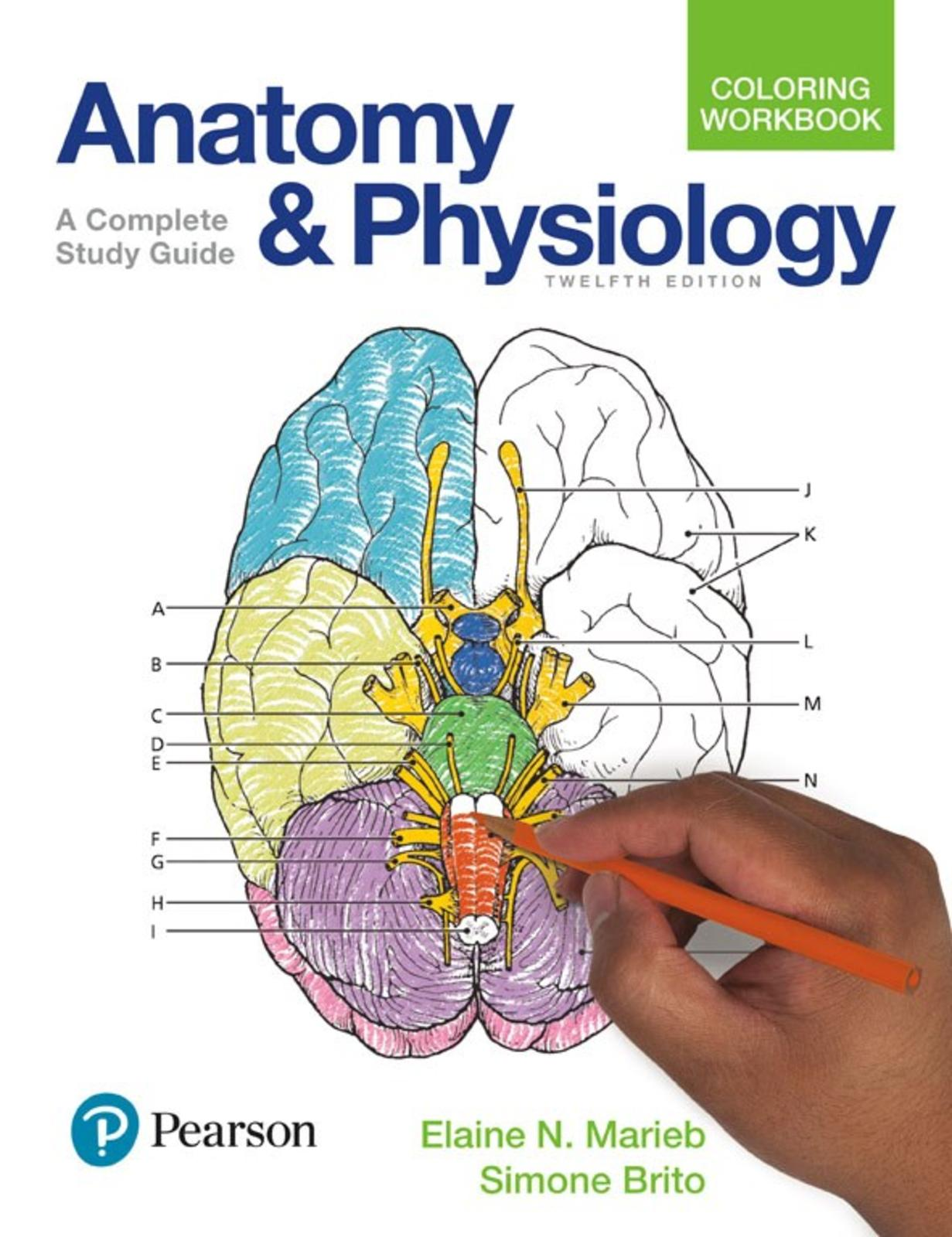 Calameo Anatomy And Physiology Coloring Workbook A