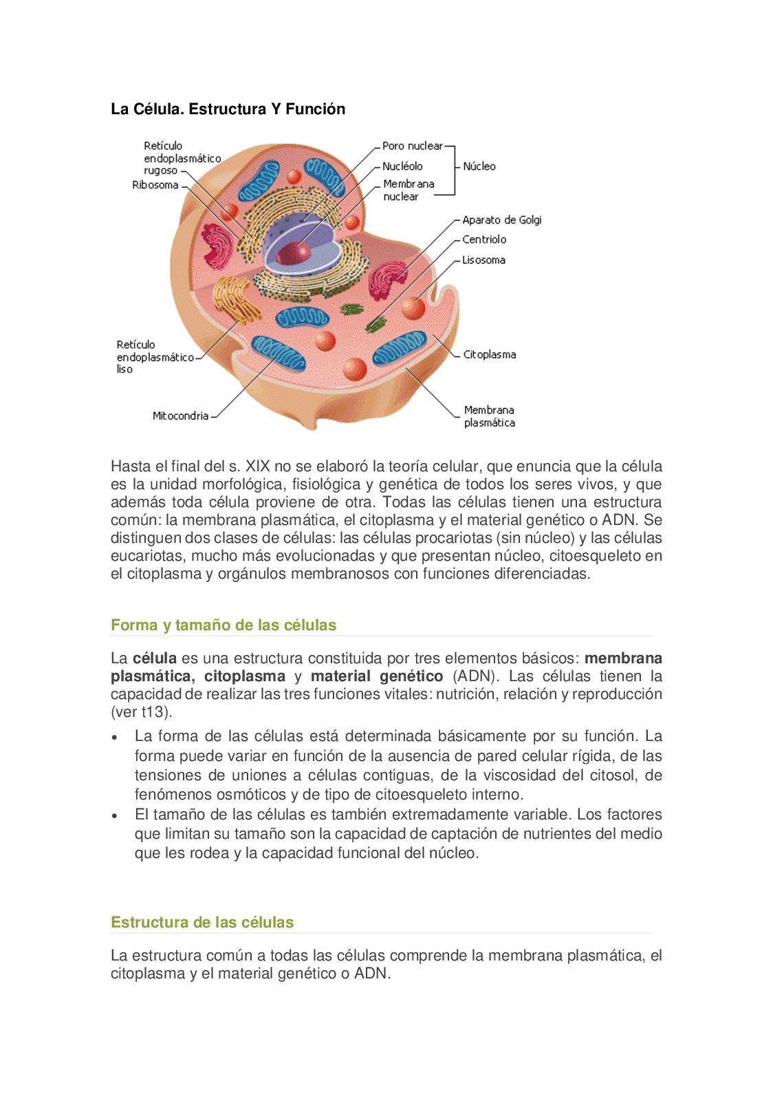 Calaméo La Célula