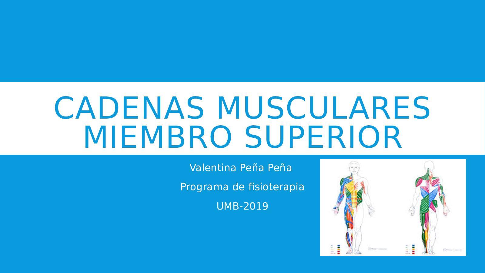 Busquet cadenas pdf musculares