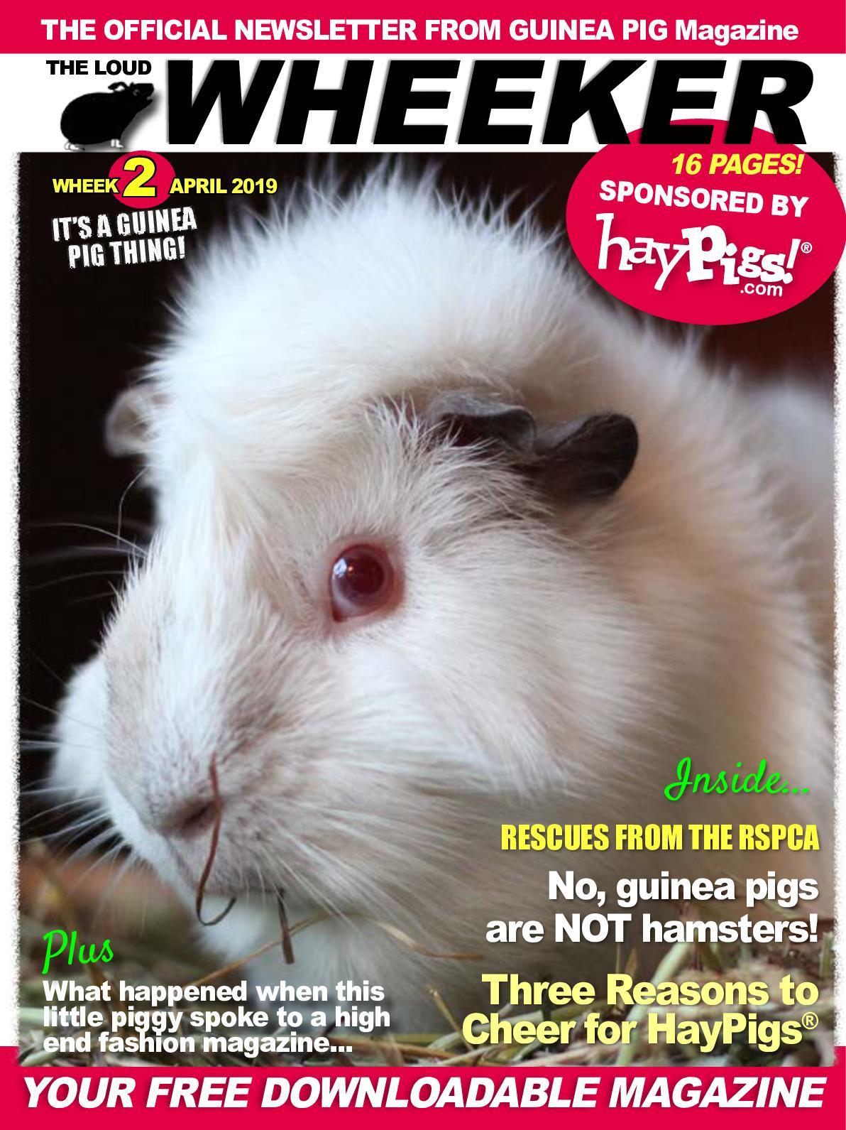 Calaméo - Newsletter Wheek2 Hay Pigs