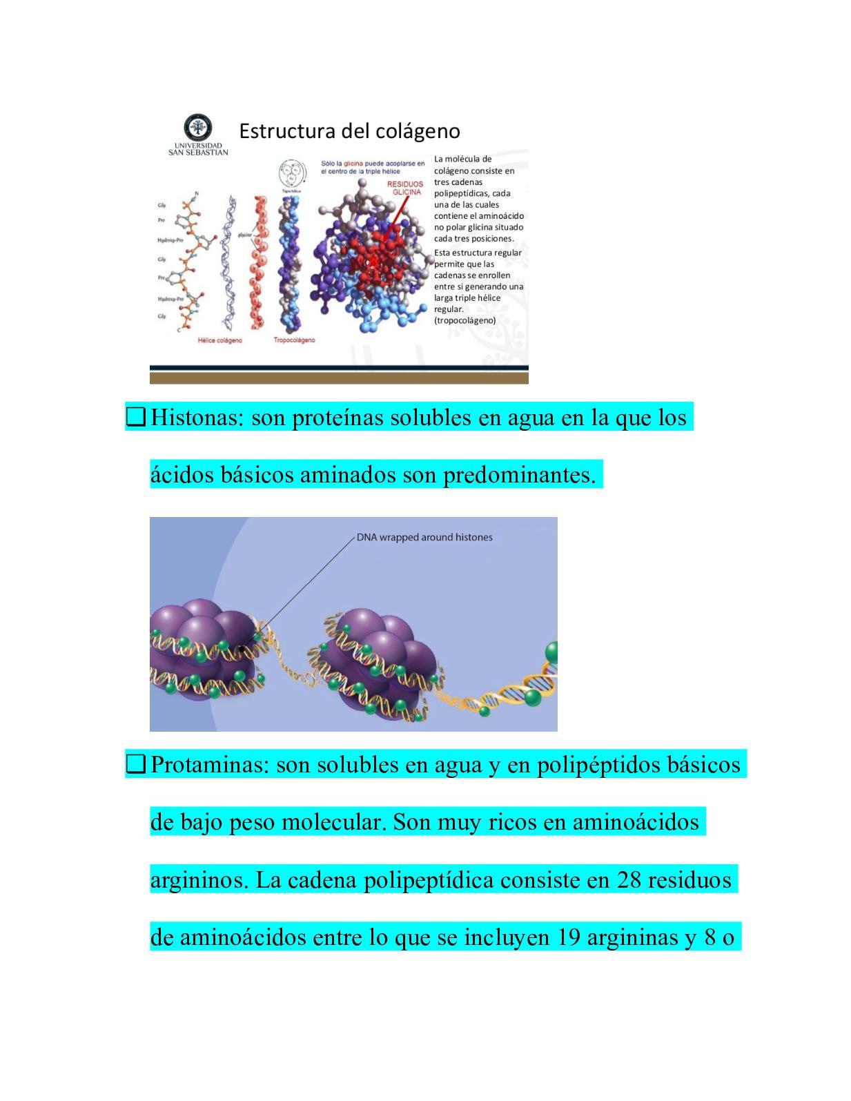11 2 3 Aminoácidos Y Proteínas Calameo Downloader