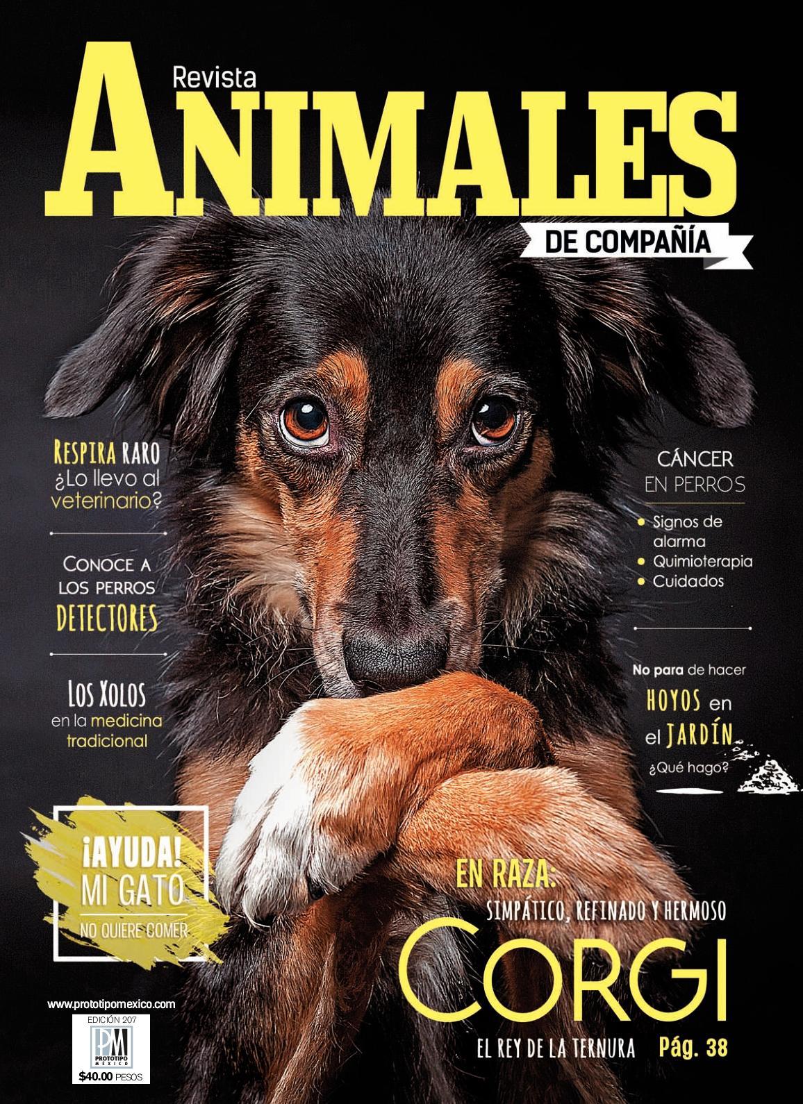 osteosarcoma en perros caso clínico de diabetes