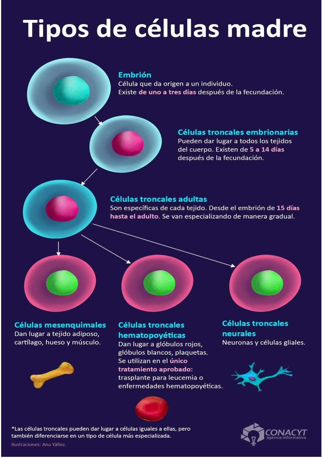 investigación con células madre y diabetes tipo 1