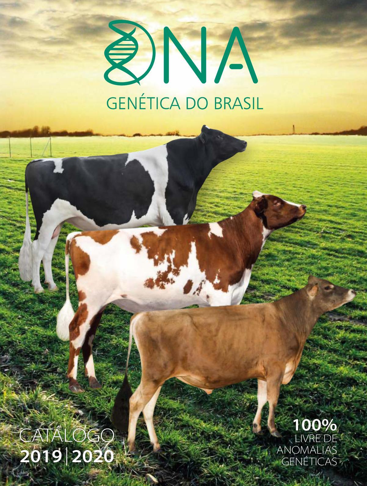 DNA Catálogo 2019 CORTES