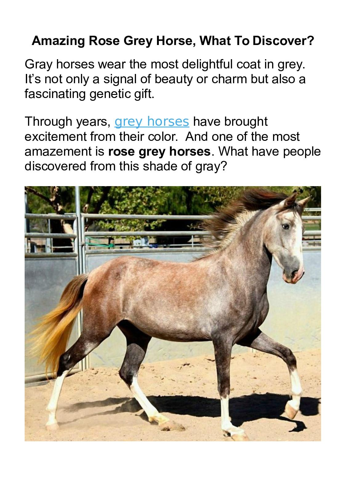 Calameo Rose Grey Horse Breed Or Just Coat Color