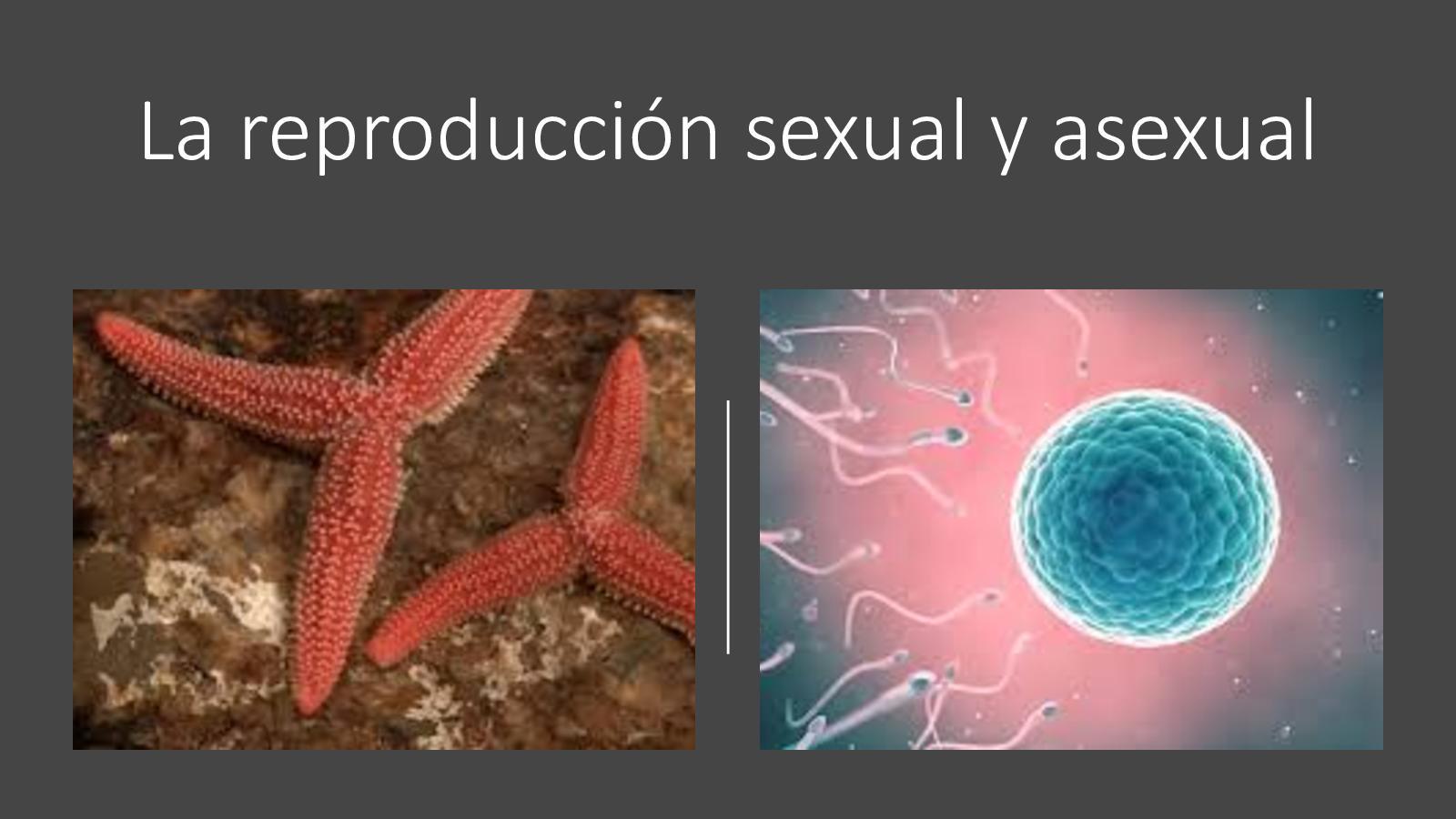 Calaméo La Reproducción Sexual Y Asexual En Los Animales